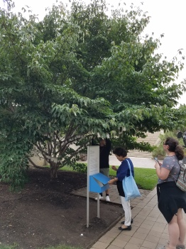 The Wish Tree by Yoko Ono at the Hirschhorn Museum