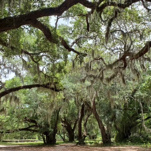 Ginormous Live Oak trees dripping with Spanish Moss create canopies of shade.