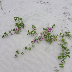 Wild flowers growing in the sand on the beach.